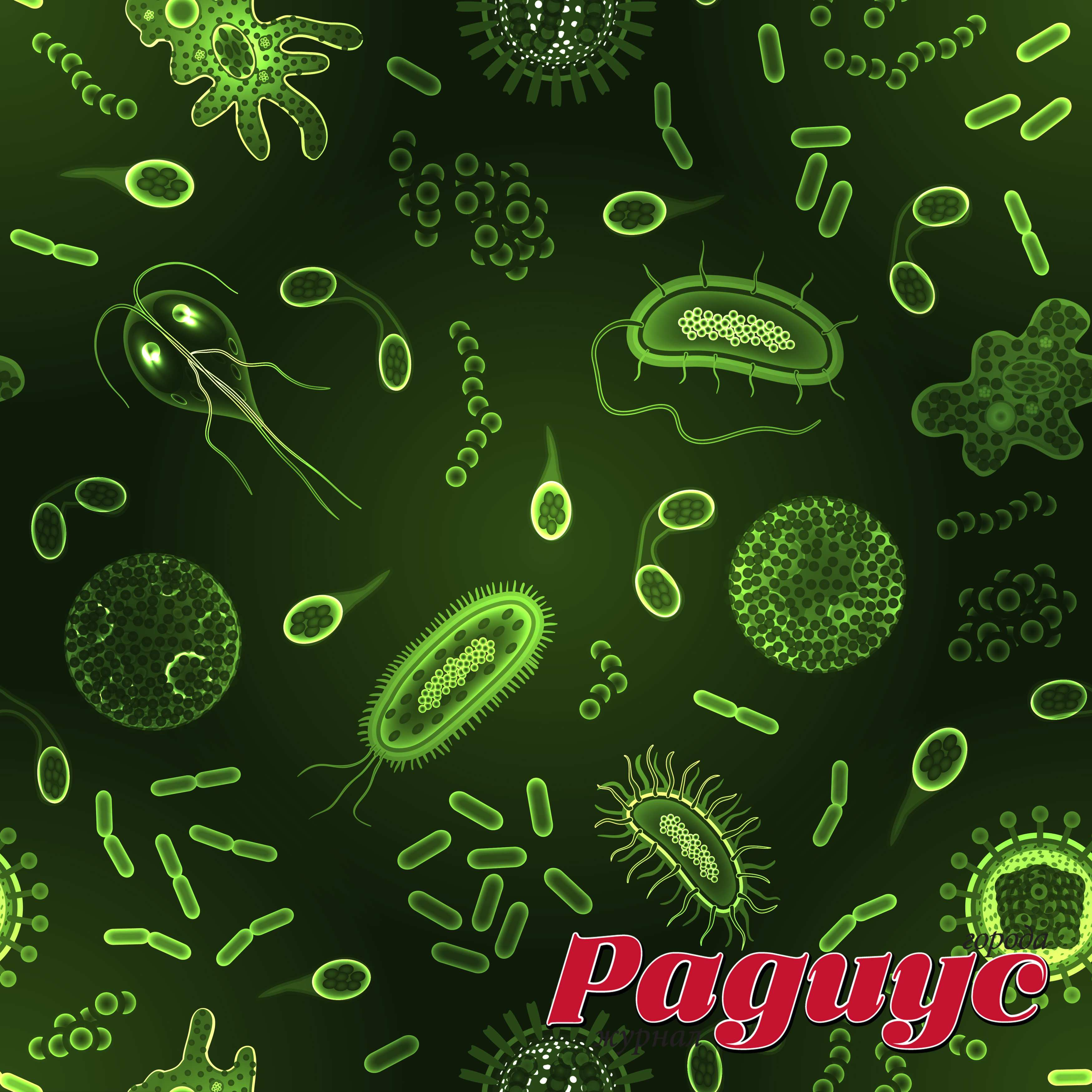 полезные бактерии в организме человека