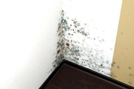 При какой влажности появляется грибок