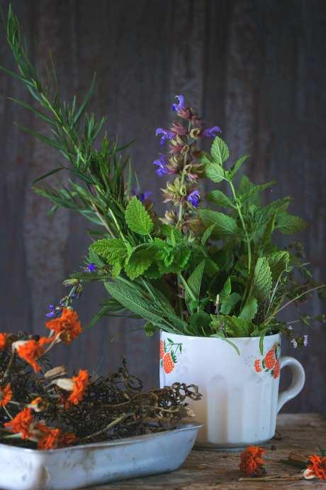 Какие комнатные растения приносят финансовое благополучие